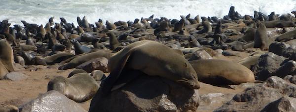 Seal Colony at Cape Cross