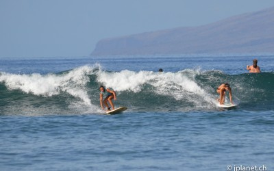 Surf Bunnies in Action