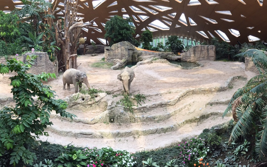 Elephants in Zürich's Zoo